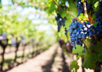 Tour Two – Wine and History – £120/person