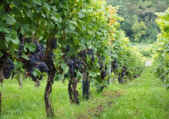 OTHER VINEYARDS